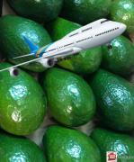 Авокадо SEMIL 34 свежее Доминикана самолетом, Москва